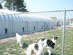 metal-building-doggie-dorm-kennels