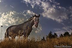 Caballo a contraluz (dsc828) Tags: sky horse contraluz caballo dsc828 flickraward danielsebastin