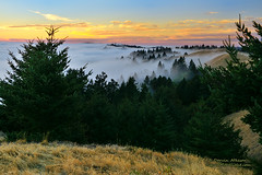 California Dreamscape (Darvin Atkeson) Tags: sunset marin headlands landscape rolling fog forest golden state california light foggy pine trees forested ridgecrest stinsonbeach pointreyes pacific coast coastal foothills darv darvin atkeson liquidmoonlightcom gate