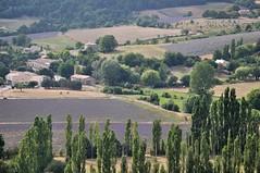 Champs de lavande (|FrederiClaveaU|) Tags: france nature field landscape nikon champs lavender paysage lavande sault vaucluse d90
