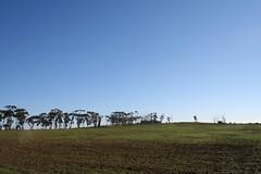 20120813_7965 Greek Hill (Ardcloney) (williewonker) Tags: trees landscape volcano hill australia victoria wyndham tarneit greekhill