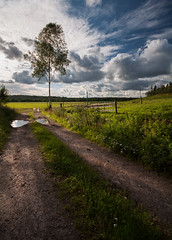 Pasture (- David Olsson -) Tags: road summer tree nature grass clouds fence landscape nikon afternoon cloudy sweden tripod sigma sunny august pasture birch 1020mm puddles 1020 lonelytree 2012 hage dx vrmland lonesometree d5000 scenicsnotjustlandscapes vlberg davidolsson algustad