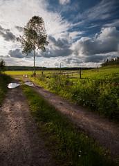 Pasture (- David Olsson -) Tags: road summer tree nature grass clouds fence landscape nikon afternoon cloudy sweden tripod sigma sunny august pasture birch 1020mm puddles 1020 lonelytree 2012 hage dx vrmland lonesometree d5000 scenicsnotjustlandscapes vlberg davidolsson algustad