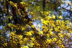Reflections II (jeeprider) Tags: nature botanical outdoors florida infocus highquality ecopreserve elementsorganizer
