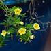 2012 New Garden Airshow