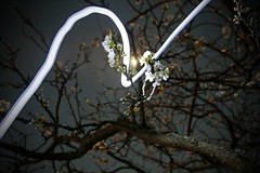 The Magic of Spring (Paul J's) Tags: light tree night painting spring long exposure blossom plum led 120830