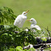 Uccelli verso la Pintada (5)