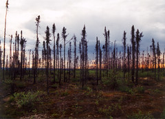 img-27 (saffronearth) Tags: canada yukon dempster eagleplains