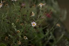 grief (Timoleon Vieta II) Tags: flowers grief timoleon