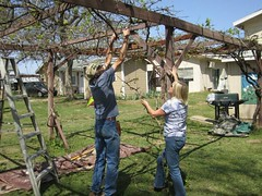 Mike and Liisa trim vines