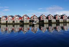 Norwegian Rapsody (DanielaNobili) Tags: svolvr norway lofoten norge danielanobili gull sea north
