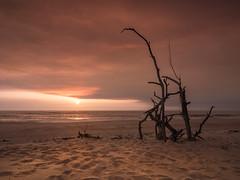portugal37 (bertigarcas) Tags: olympus omd em5 zuiko 918 haida filters filtros portugal playa beach marina seascape landscape atardecer sunset sun torreira dunas