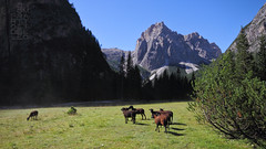 Morning (lightsaber*) Tags: dolomites dolomiti pecore pecora red rossa mattina morning alto adige tre scarperi mugo partenza start sheep sheeps italy italia mountain montagne