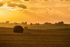 Rolls at Sunset