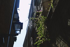 Dans les rues de Barcelone (gwennaelle.masle) Tags: barcelona barcelone espagne espaa city ciudad calle sun soleil sea palmiers street