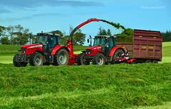 (Zak355) Tags: rothesay isleofbute bute scotland scottish farming masseyferguson tractors farm silage