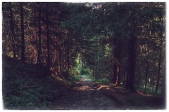 Alpbachtal (ojour) Tags: landscape landschaft mhlbach alpbach austria sterreich tyrol tirol alps alpen trees bume forestroad waldweg forest wald