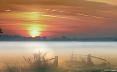 Der Tag beginnt (otto.hitzegrad) Tags: natur sonne vgel sonnenaufgang nebel nebelstimmung morgens weide morgenrot gatter