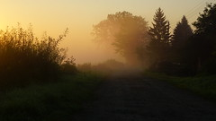 Way to sunny fog.. (Davis Davisinski) Tags: sonya6000 sony a6000 nature myst morning fog light road daarklands autofocus 2016