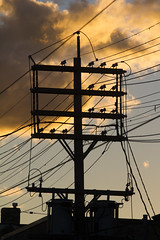 Telephone pole with twilight sky (jer1961) Tags: toronto queenstreet leslieville