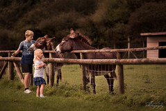 ... Margam Park ... (Margarita K...) Tags: southwales south wales beautifulwales margam park child childhood children fairytales portrait farm donkey ngc nikon d5200 mkphotography margaritakphotography