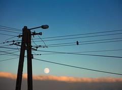 DSC_0067 (agatasobczak) Tags: minimalism nature moon clouds cloud telephone wire outdoor lamp light blue sky bird animal