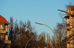 West-Berliner Straßenlaterne / West-Berlin Street light (ThE_bErLiNeR) Tags: berlin siemens beleuchtung tempelhof westberlin aeg neonlicht leuchtstoffröhre standart peitschenmast strasenlaterne strasenlampe attilastrase hellux bogenmast