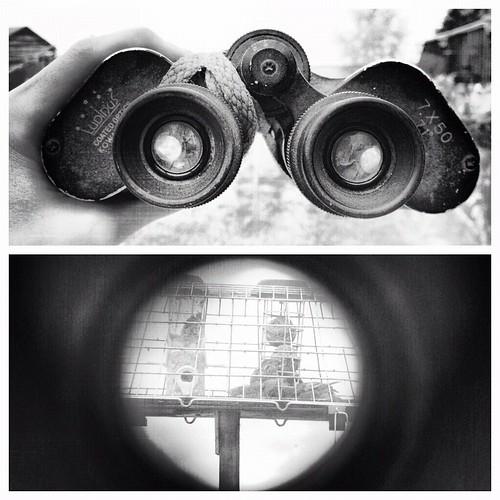 Binocular View.