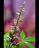 ✿ (3 н σ υ d ♥) Tags: pink plant flower tree green water leaves drops nikon purple ورده وردي بنفسجي عهود 3houd ohoud