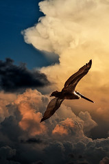 Gathering Clouds (Susan Hall Frazier) Tags: sky weather clouds sunrise florida pelican stpetersburgflorida summerstorm blinkagain bestofblinkwinners blinksuperstars flickrsfinestimages1 flickrsfinestimages2