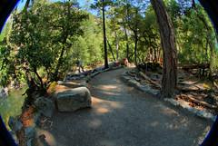 Happy Isles Path HDR (Monica's Dad) Tags: california nature forest woods path scenic fisheye trail yosemite yosemitenationalpark hdr happyisles