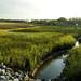 Clam Creek 15