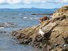 Bella & Poppy (russelljsmith) Tags: winter newzealand sun beach dogs sunshine coast sand poppy bella sundaydrive firthofthames 77285mm waitibay