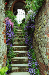 Amberley - West Sussex (Mark Wordy) Tags: gate arch village westsussex campanula stonesteps amberley campanulaposcharskyana