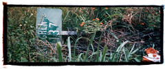 137 Street Homestead Post Hurricane Andrew 1992 (jacob schere [in the 03 strategically planning]) Tags: street camera panorama film up grass sign analog print weeds weed florida miami jacob hurricane over down andrew communication fallen damage knocked homestead fl 1992 mm lucid 35 printed disposable reuse taped reused handprinted m2c schere disposabledisposable jacobschere lucidcommunication