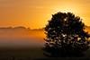 sunrise meets the mist (peet-astn) Tags: morning sun mist tree field fog sunrise bravo day explore