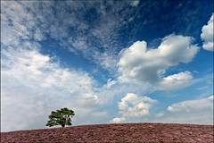 brunssummerheide (heavenuphere) Tags: sky tree nature netherlands clouds landscape outdoors one europe solitude heather nederland 1022mm singletree gi heide limburg brunssum brunssummerheide
