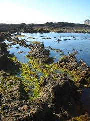 Seascape Trail tide pools (tsoleau) Tags: california ca tidepools ranchopalosverdes