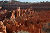 In the Field of Orange Hoodoos (MrBlackSun) Tags: usa utah nationalpark bryce brycecanyon brycecanyonnationalpark brycecanyonnp usa2012