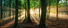 The heart of a tree (Lucky Lucas) Tags: trees color forest golden beam rays sunrays sunbeam lightray lightbeam nikond300