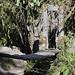 Per raggiungere la riserva privata di Acaime si attraversano diversi ponti sospesi