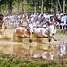 Bull Racing in Kerala - Photo 1