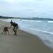 Dando uma volta na praia...