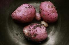 Rose Spuds (Pixietoria) Tags: pink food vegetables garden potatoes dish gardening earth grow cook bowl vegetable soil potato tatties growing spud ingredient tuber