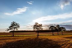 Herbst (Nils A. Petersen) Tags: road street autumn trees light sky sun field clouds fotograf strasse herbst felder himmel wolken leipzig sachsen landschaft bume schatten gegenlicht ackre nilsapetersen wwwnilspetersenfotografiede