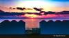 Wild sicily Trapani (italianoadoravel .BACK ,,,,,,,,,,,,) Tags: camera flowers wild gold coast salt windmills best sicily molinos 5star salina trapani mozia motia motya platinumphoto flickrlovers