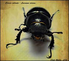 NATURALEZA   C.M.   Explore. (Cesalf) Tags: naturaleza