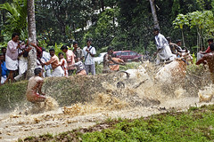 Bull Racing in Kerala - Photo 4 - How to Jump the barricades (Anoop Negi) Tags: india game water field race rural photography photo rice bullock mud photos indian culture kerala bull racing best ox jockey ritual tradition splash macho rider cochin anoop redbull kochi onam ernakulam racer manhood negi blackbull adoor ezee123 maramady mahotsavam