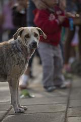 Bored Dog (Dual Productora Audiovisual) Tags: dog film animal canon studio photography photo time dual fotografa dualtime