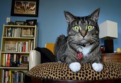 Sup (pantagrapher) Tags: cat photo nikon feline cray d600 moops
